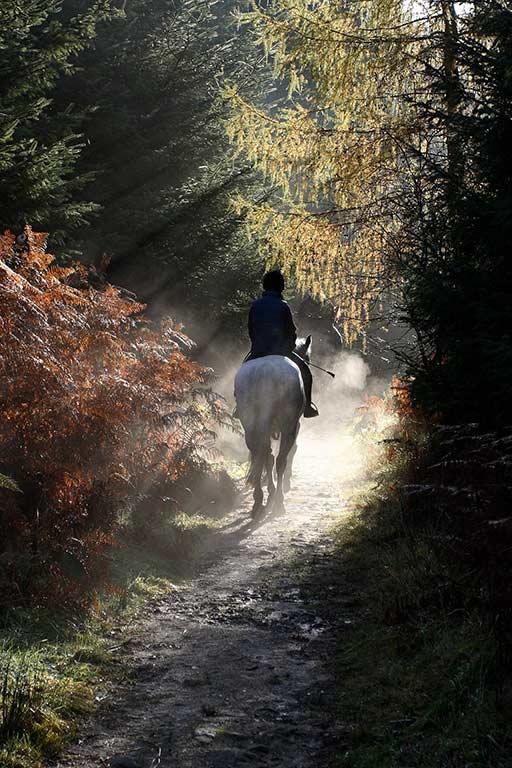 Randonnée en forêt à Chantilly